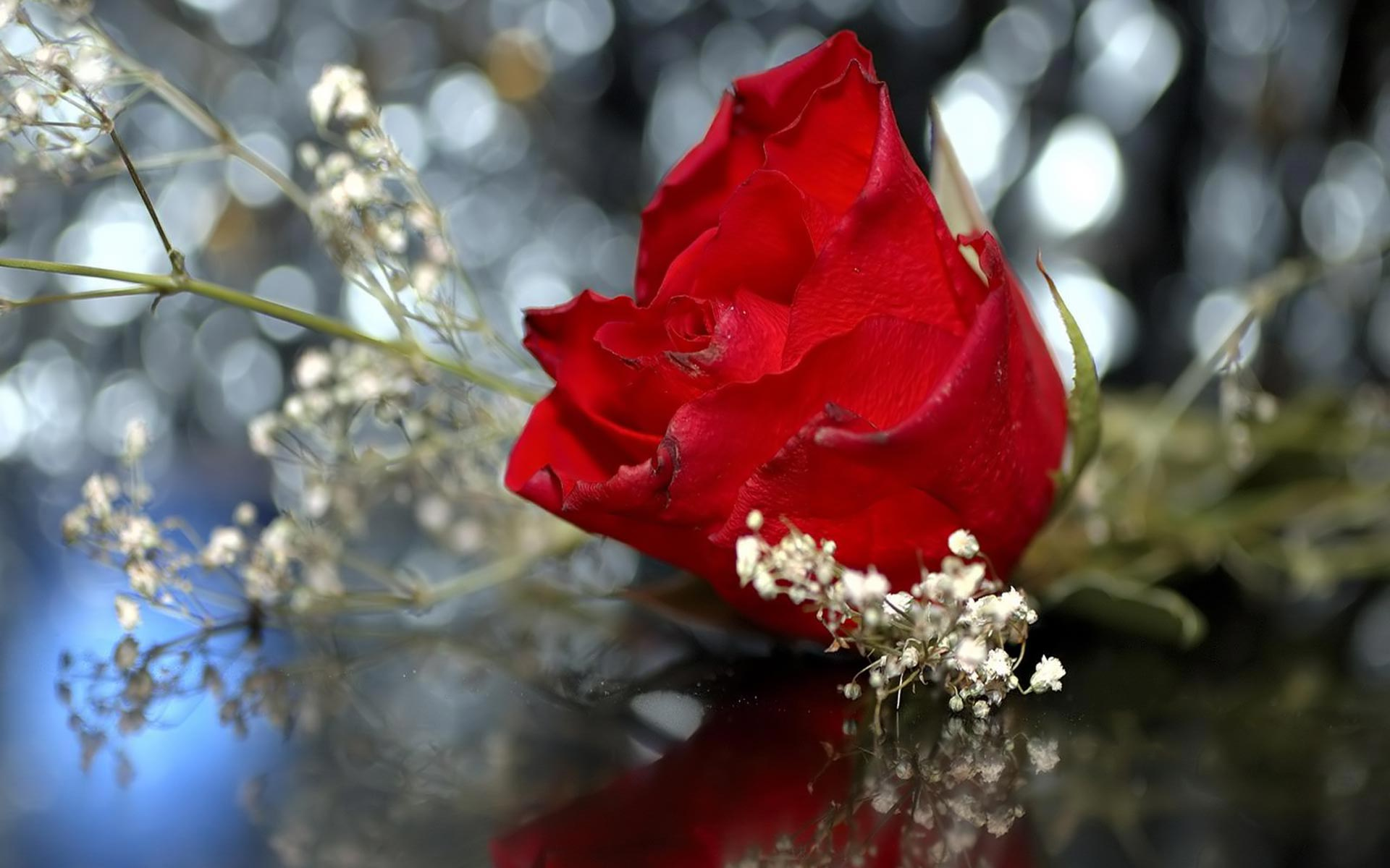 Wedding Red Rose Flowers HD Wallpaper Nature Wallpapers