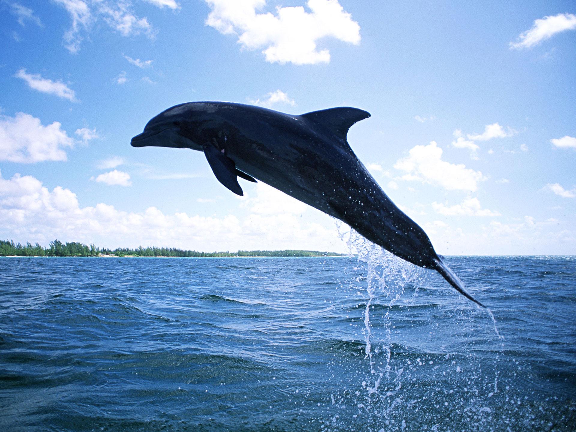 Dolphin Wallpaper For Ipad HD Wallpapers HD Wallpaper