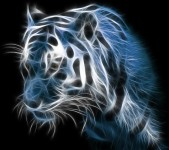 Samsung Galaxy S4 Wallpapers HD - Beautiful black and white tiger wallpaper