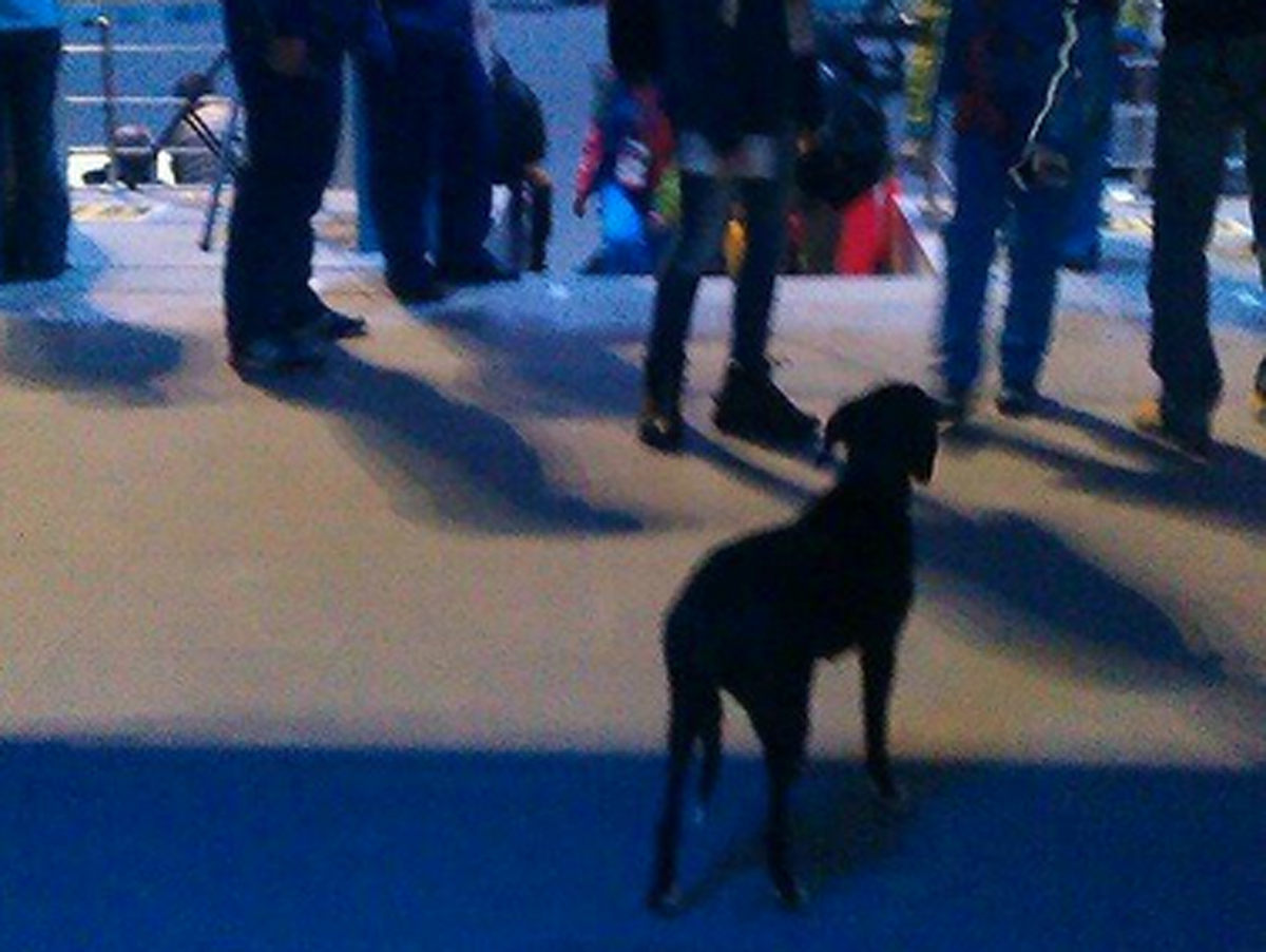 Stray Dog At Olympic Opening Ceremony - Business Insider