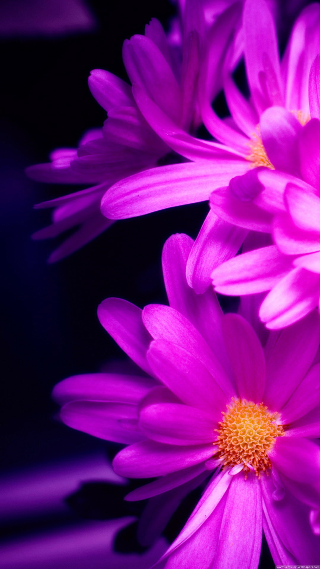 Pink Daisy iPhone 6 Plus HD Wallpaper