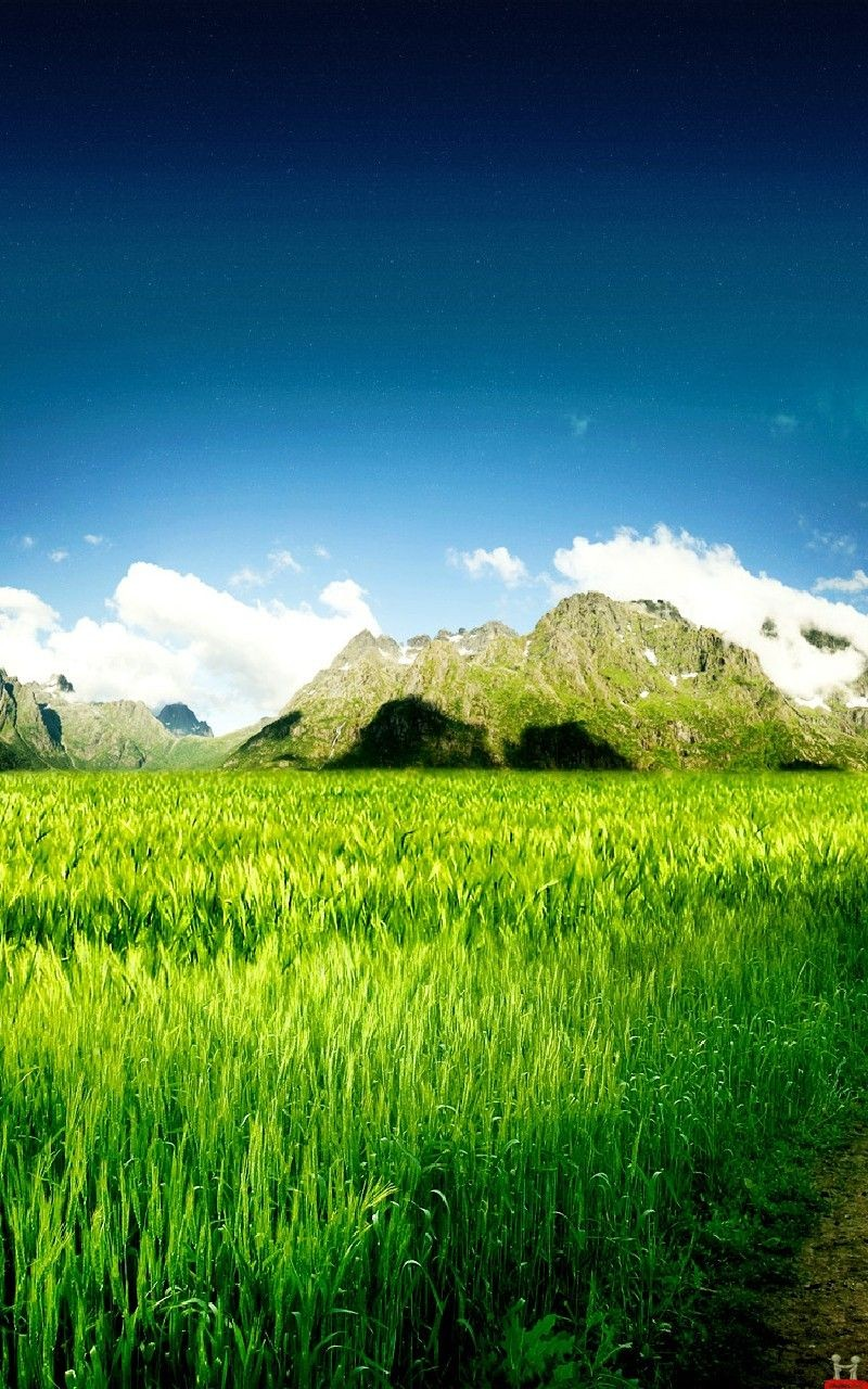 Green field Samsung Galaxy Note 3 HD Wallpaper